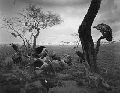 9hyena-jackal-vulture.jpg